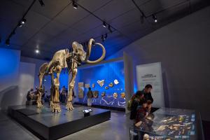 Mammouth de Choulans, salledes Origines - musée des Confluences / © Quentin Lafont - Musée des Confluences