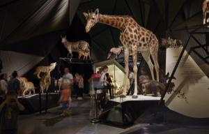 Collection Espèces du Musée des Confluences © Quentin Lafont