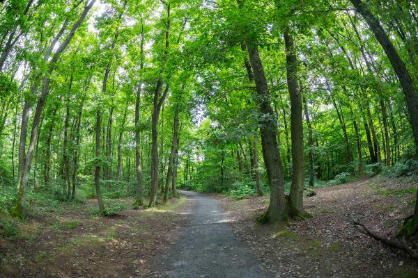 Le Bois de Serres © Laurent Vera - Métropole de Lyon