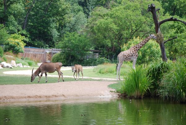 Zoo de Lyon - Parc de la Tête d'Or
