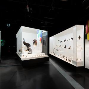 musée des Confluences – Bertrand Stofleth