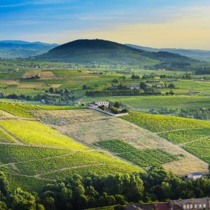 Les vignes dans les monts du beaujolais © Gaelfphoto/Shutterstock.com