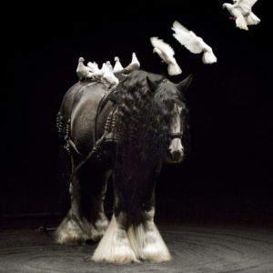 Théâtre Equestre Zingaro - Bartabas