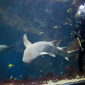 La fosse aux requins © Aquarium de Lyon