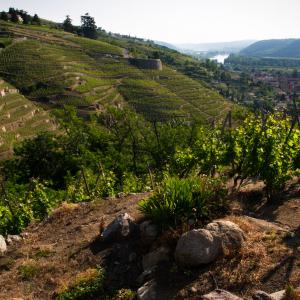 Côteaux de la Vallée du Rhône vers Vienne
