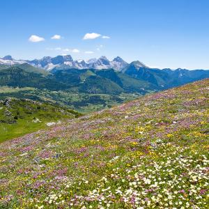 Flore du Haut-Diois © Lionel Pascale / Drôme Tourisme