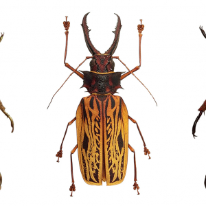 Coléoptères, insectes extraordinaires - Musée des Confluences