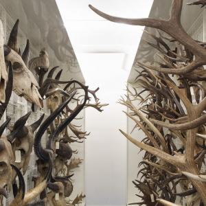 Réserves d'ostéologie du Musée des Confluences © Pierre-Olivier Deschamps