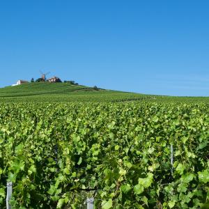 Pixabay - Vignes de Verzenay, Champagne